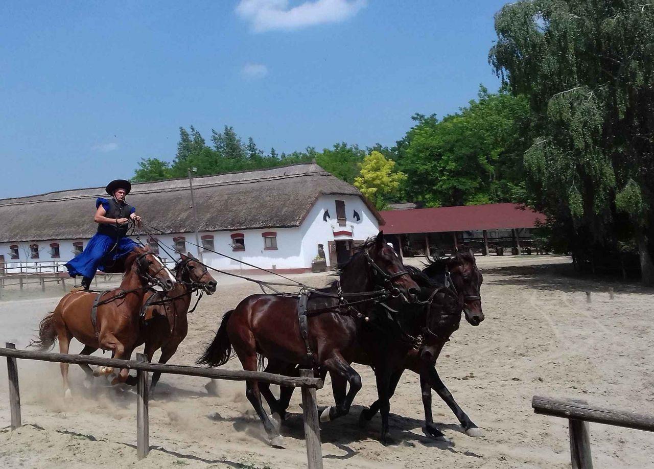 The Puszta Horse Show Lajosmizse